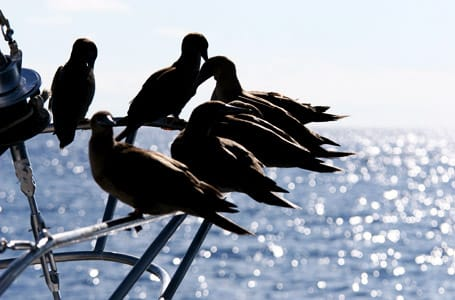 Migrant Shore Birds in the Galapagos
