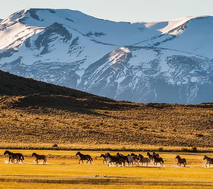 Wild Horses in Patagonia