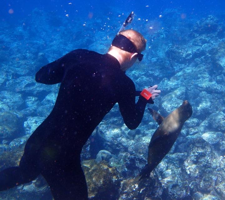 Snorkeler swimming with Galapagos Sea Lion at Punta Espinosa