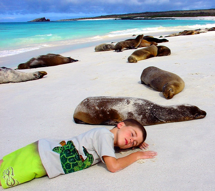 Boy resting with sea lions on a beach in the Galapagos