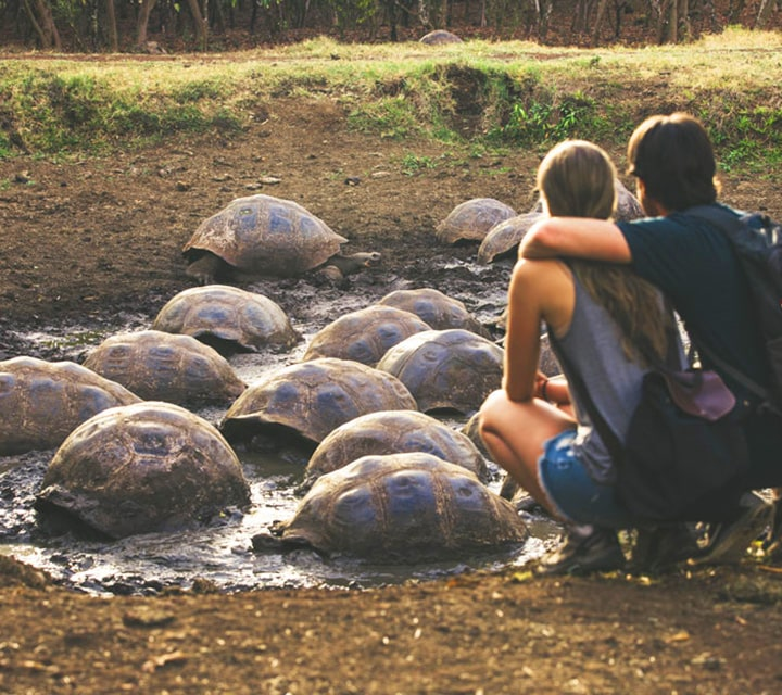 Couple kneeling down to closely observe Giant Tortoises in the Galapagos
