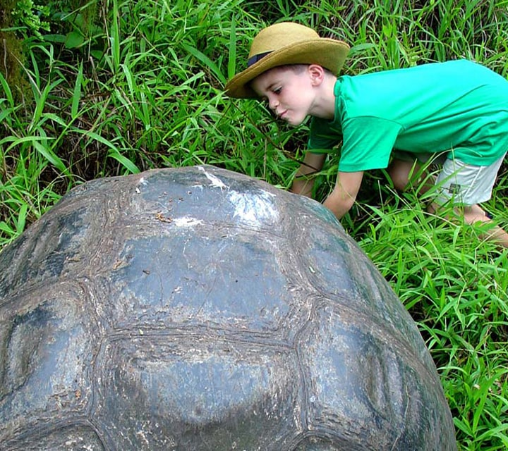 A little boy curiously looking inside a Giant Tortoise shell in the Galapagos Islands