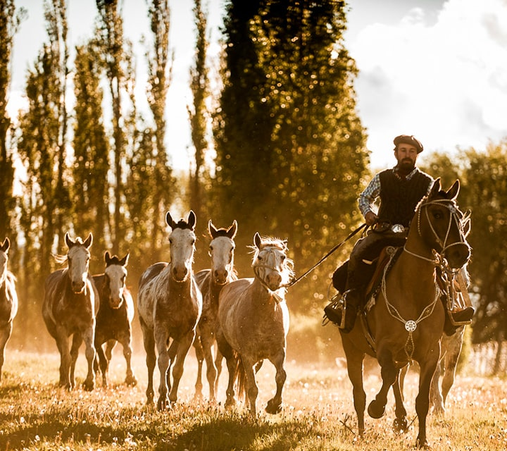 Gaucho herding in Patagonia