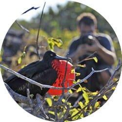 Galapagos Cruise Activity - Bird Watching