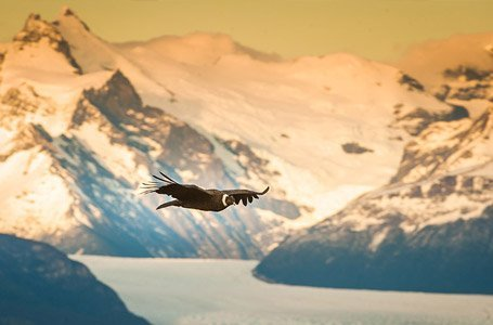 Patagonia Bird Watching