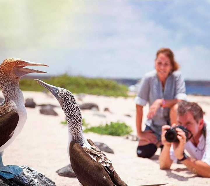 Visitors in the Galapagos National Park taking photos of blue-footed boobies