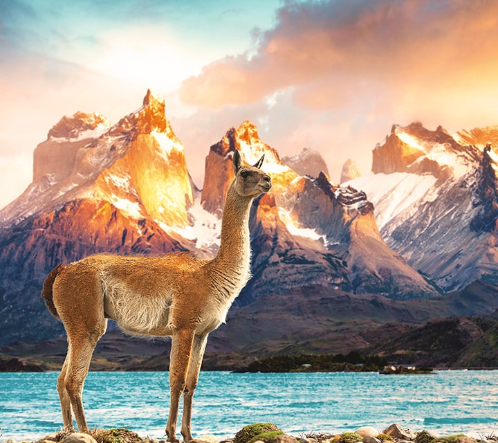 Dramatic mountain landscape with guanaco in the forefront - Chilean Patagonia