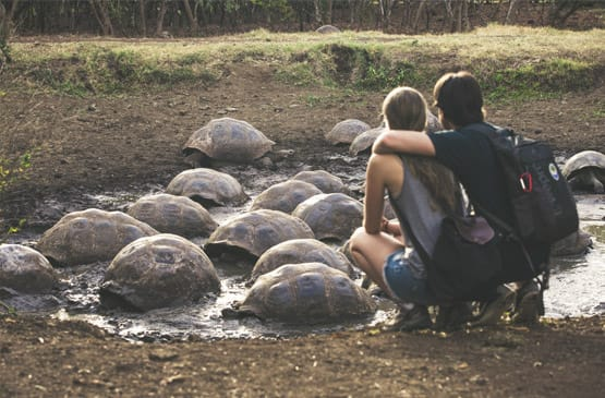 Galapagos Honeymoon