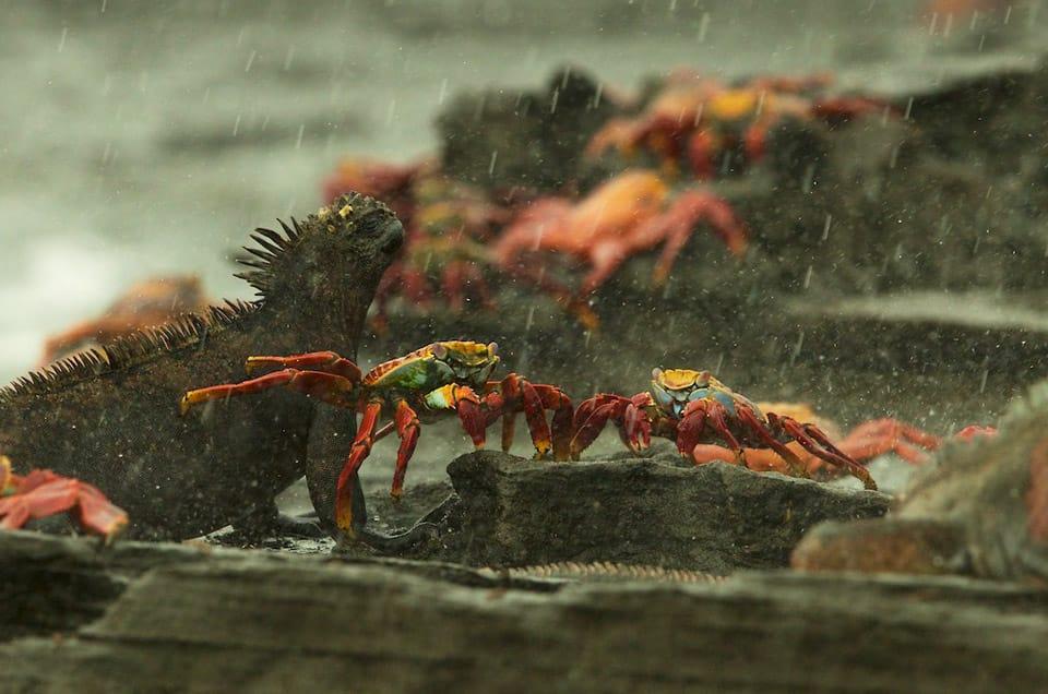 Raining in the Galapagos Islands