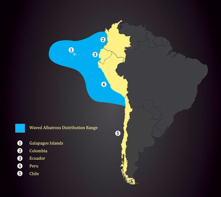 The South America map illustrating the Waved Albatross migration range