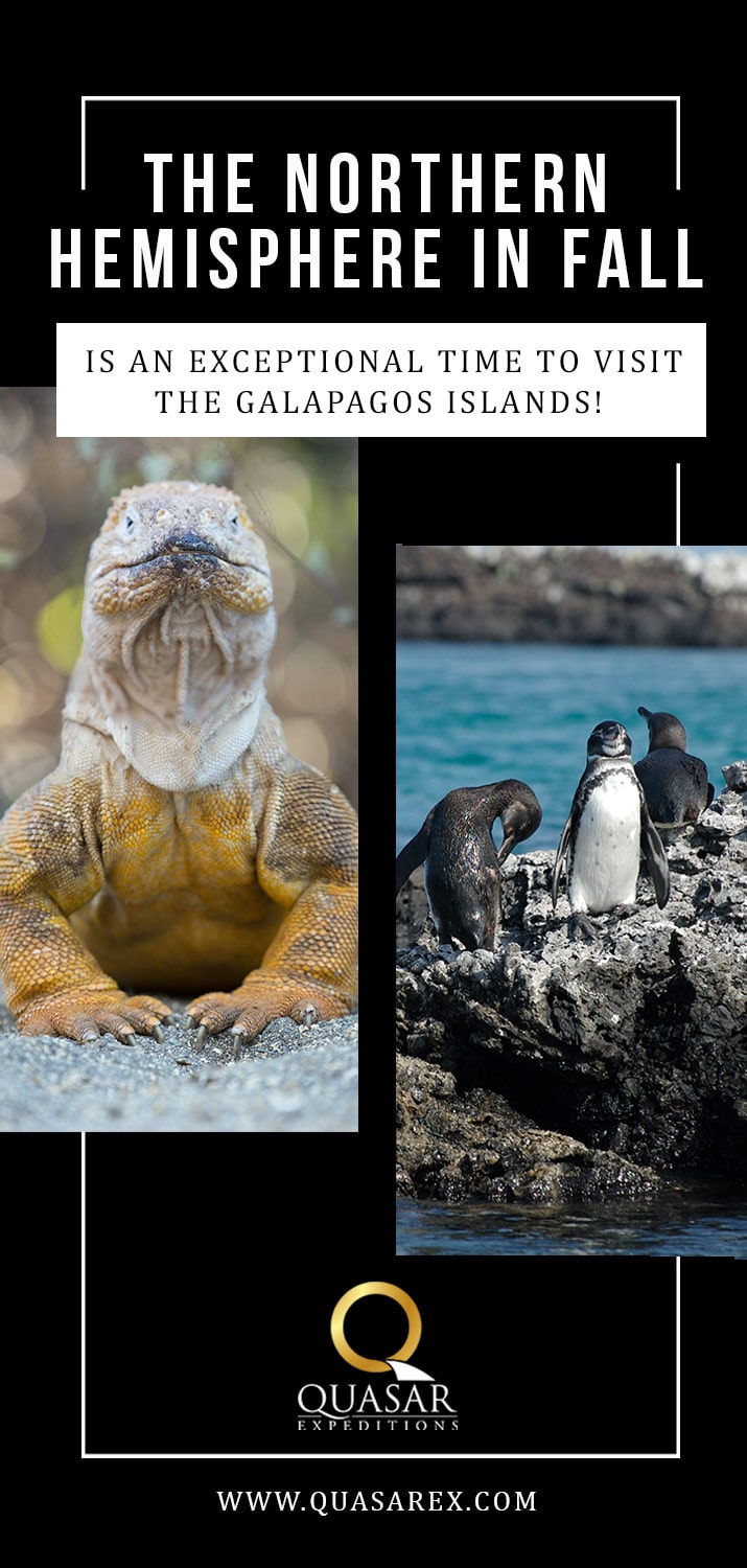 The northern hemisphere fall is an exceptional time to visit the Galapagos Islands!