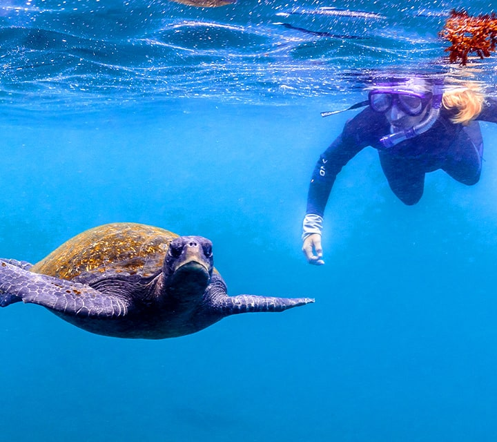 Snorkerler swimming next to a green sea turtle in crystal blue ocean water, best underwater visibility in January