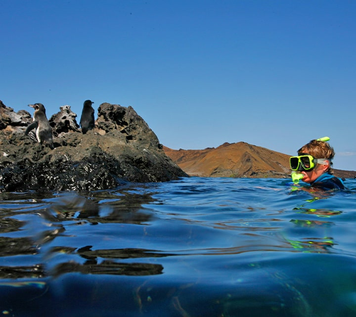 Little boy snorkeling, Galapagos Penguins perched on rocks