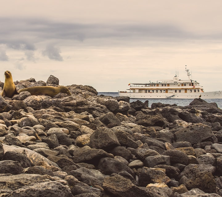 Grace Yacht closing in on sea lion and wildlife on the Galapagos Islands shores