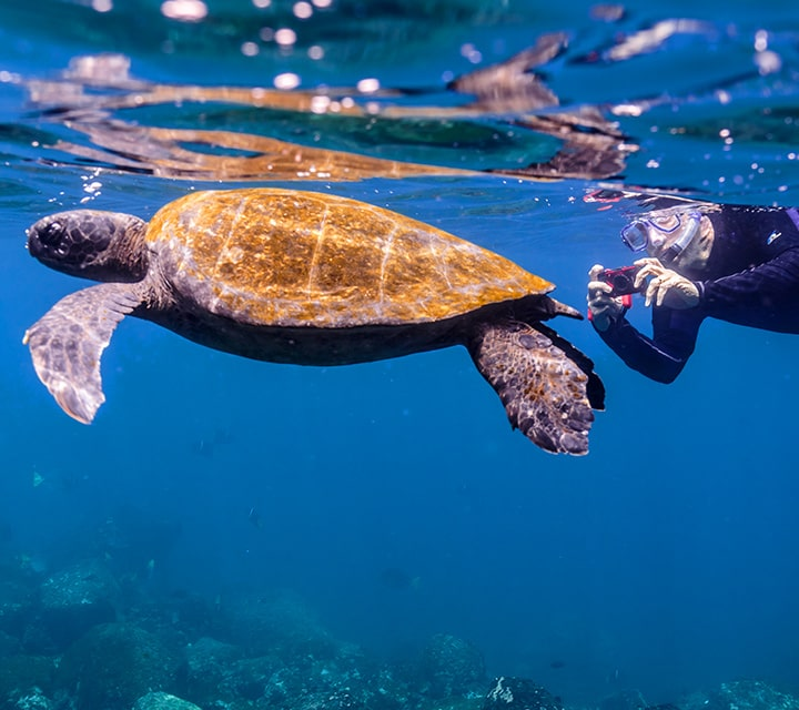 Snorkeler taking photo of Green Sea Turtle during the best underwater visibility of the year, Galapagos Islands