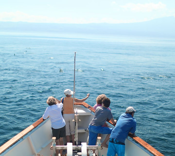 Small group of travelers taking photos of a pod of dolphins from the bow of the luxury yacht, Grace