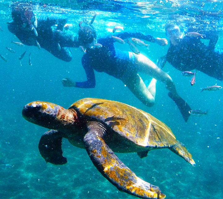A couple swimming with sea turtles in the month of July in Galapagos