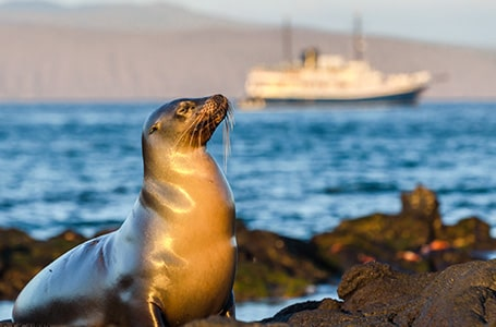 Galapagos Family Cruise Experience