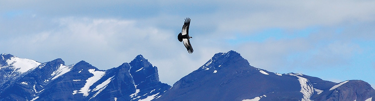 Bird Watching in Patagonia