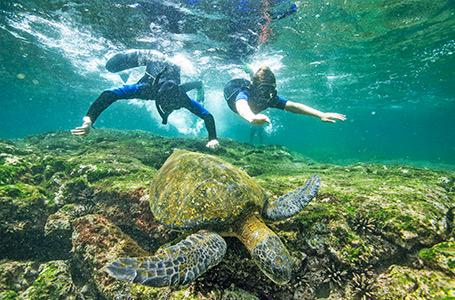 Charter Cruises Galapagos