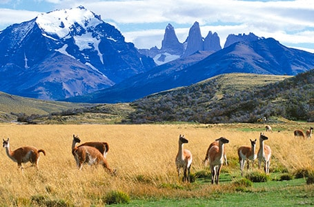 Wildlife Encounters in Patagonia