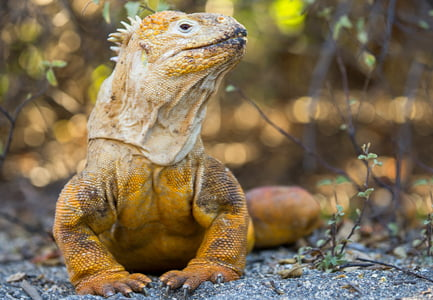 About Animals & Wildlife of the Galapagos