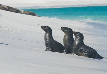 About Galapagos Islands