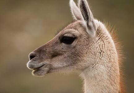 Patagonia Animals & Wildlife