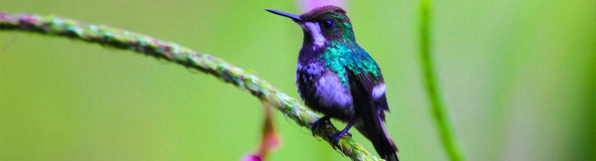 Yanacocha Hummingbird Reserve in  Mindo