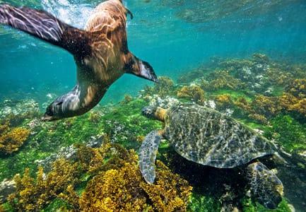 Marine Life of the Galapagos Islands, Ecuador