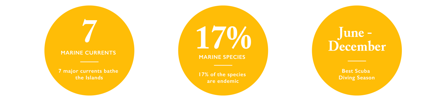 Marine Currents & Species Information about the Galapagos Islands
