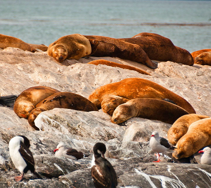 Marine Life in Patagonia
