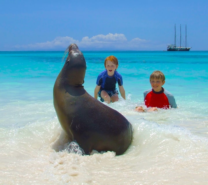 Children frolic next to a sea Lion on the beach while vacationing in the Galapagos