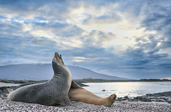Harry Skeggs Photography Tour in Galapagos