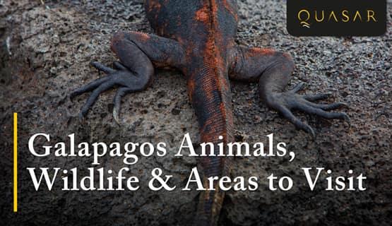 Galapagos Wildlife